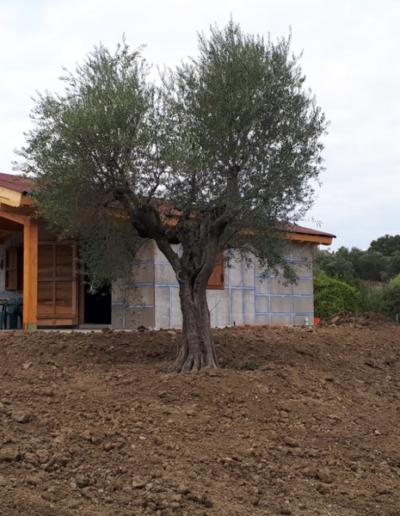 Bgl case legno Casa con pergolato (12)