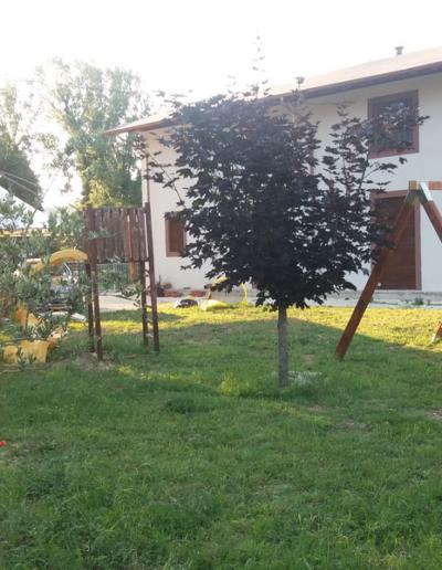 Bgl case legno case in bio edilizia (23)